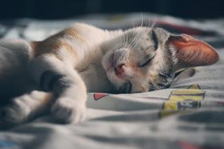 pexels cat photo